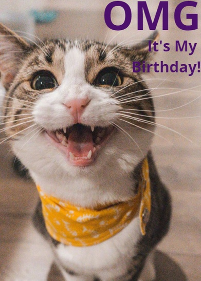 say happy birthday cat with a customized card