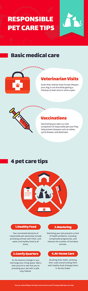 Pet Care Infographic Design