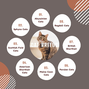 Cat Breeds Bubble Map Chart Design