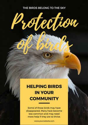 Feral Eagle Bird Protection Poster Design