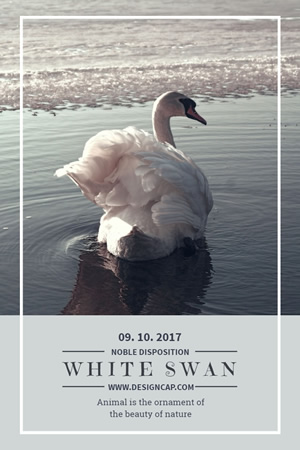 White Swan Pinterest Graphic Design