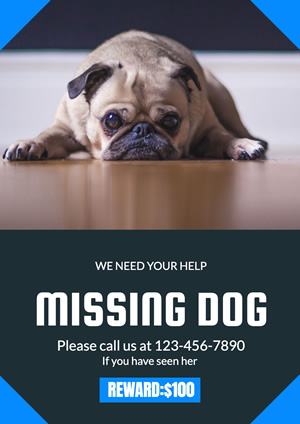 Rewarded Missing Dog Poster Design