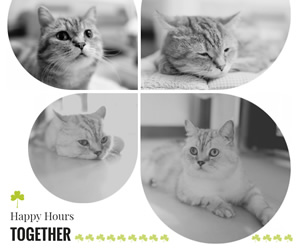 Cute Cat Facebook Post Design
