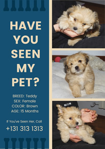 Photo Collage Lost Dog Flyer design