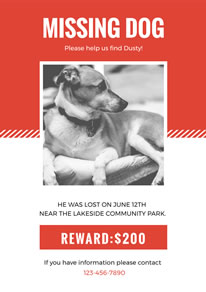 White and Orange Dog Missing Poster design